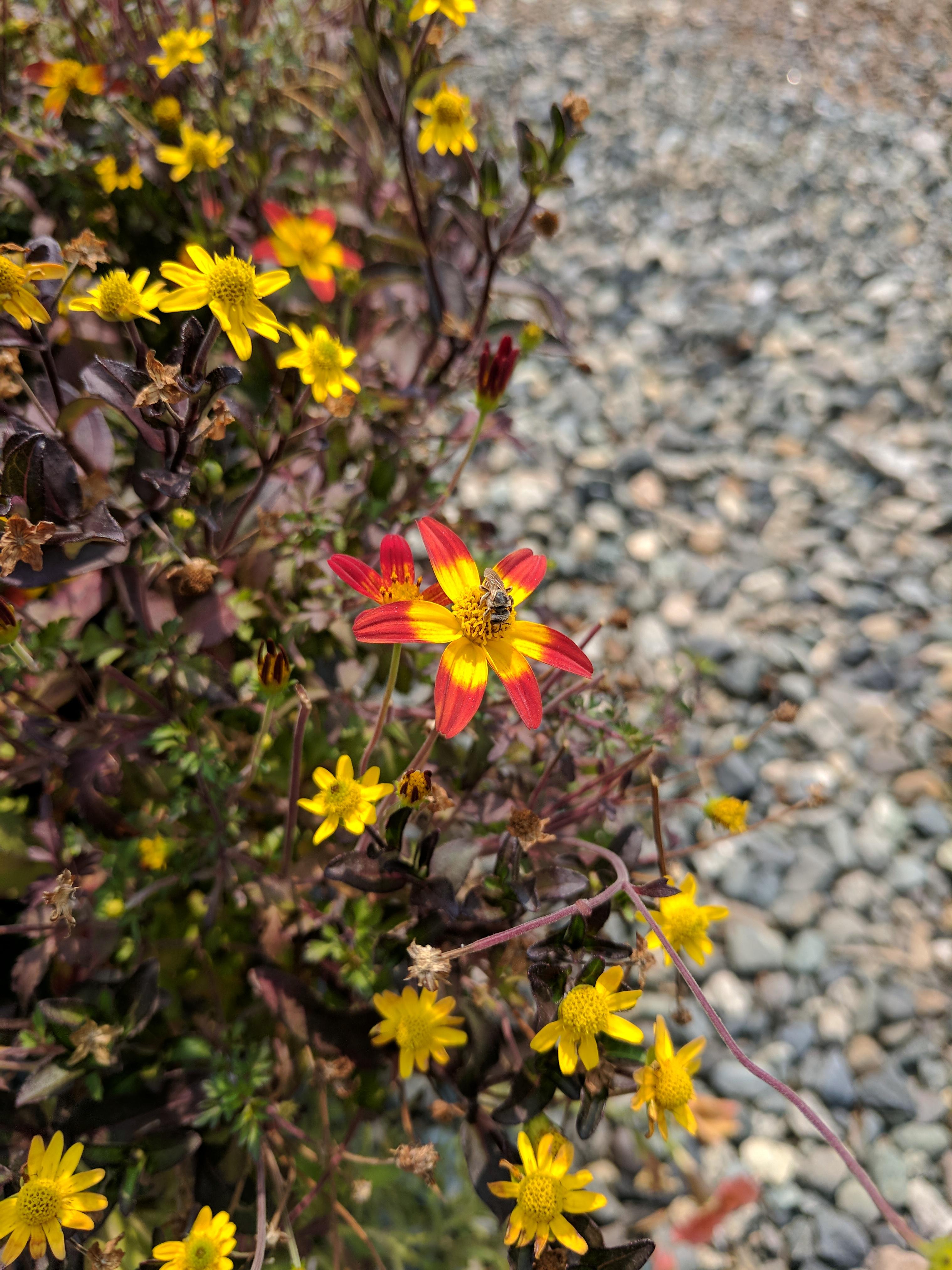 Blog - PlantSomething BC
